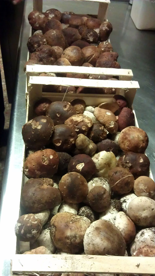 Funghi Porcini.jpg
